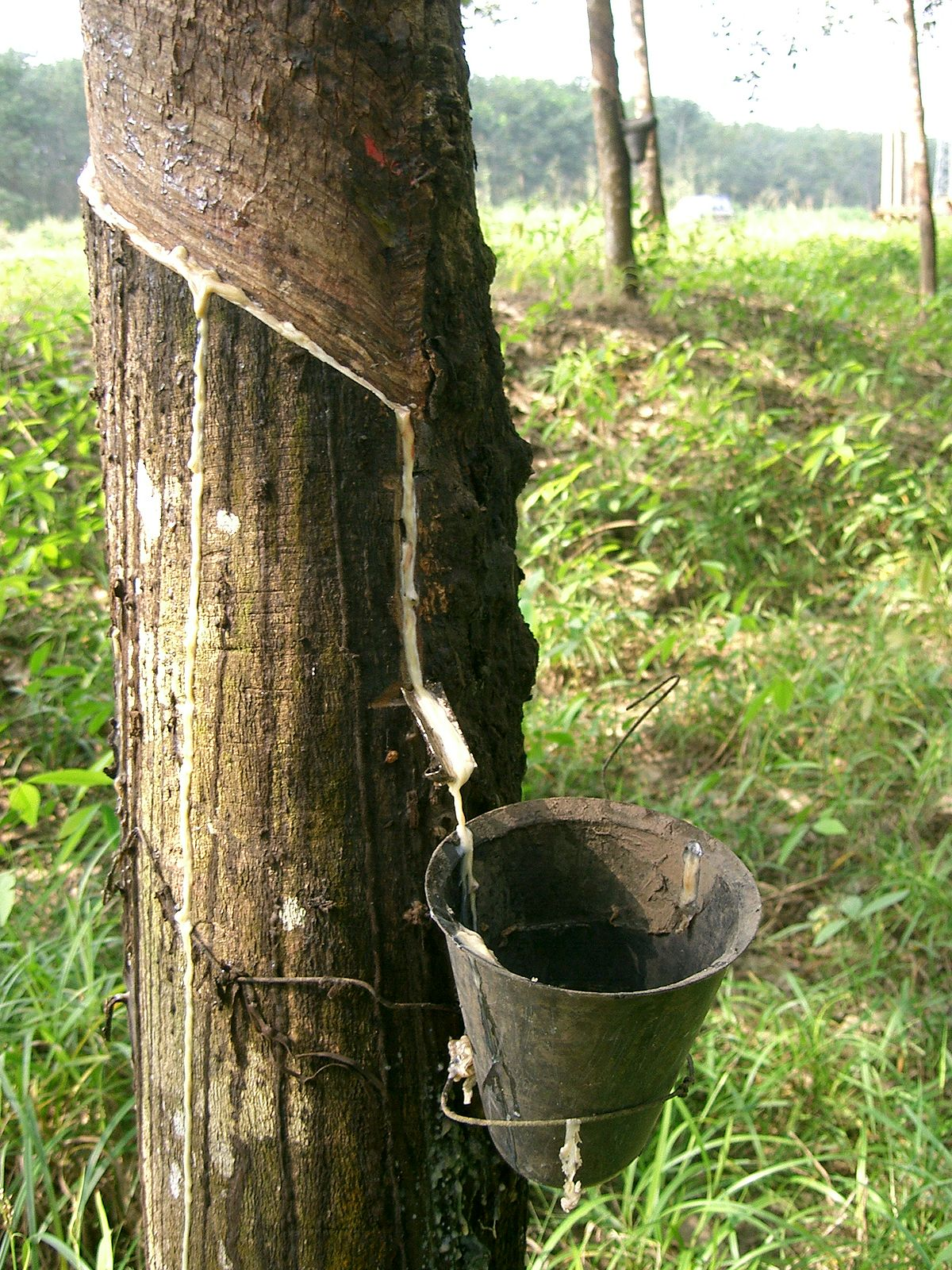 Natural rubber - Wikipedia