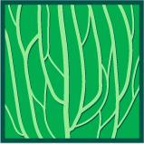 Leaf morphology longitudinal