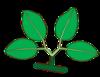 Leaf morphology type bygeminate.png