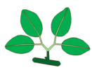 Leaf morphology type bygeminate.png
