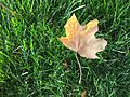 Leaf on Grass.jpg