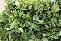 LeafyVegetables03.JPG