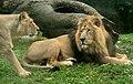 Lejon - panoramio.jpg