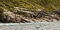 Leones marinos de Steller (Eumetopias jubatus), Bahía de la Resurección, Seward, Alaska, Estados Unidos, 2017-08-21, DD 20.jpg