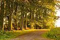 Light in the woods (10277932306).jpg