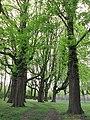 Lindener Volkspark - Hannover Linden-Süd Am Lindener Volkspark - panoramio (1).jpg