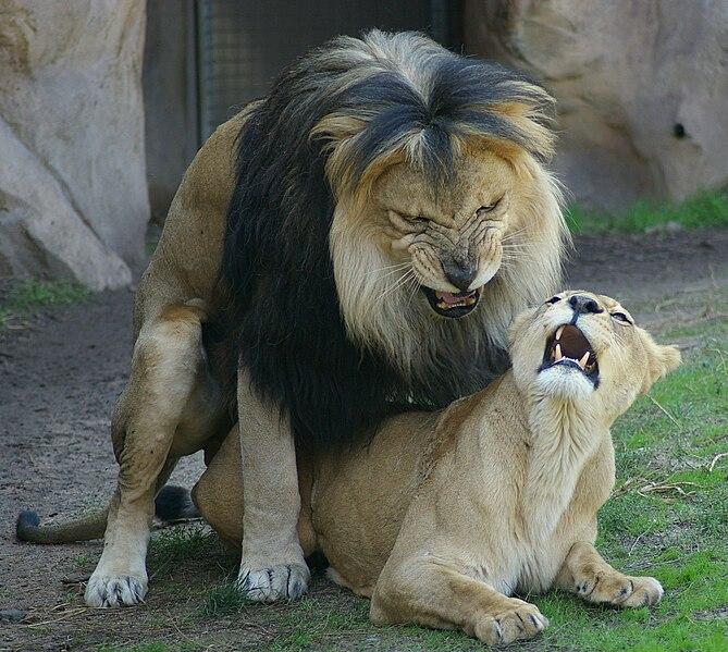 Strange Animal Behavior: Well-known Homosexual Species