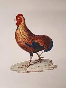 Le symbolisme du coq est lié au comportement habituel des coqs, à leur panache et à leur Le coq à la queue étalée devient la girouette la plus répandue des clochers à partir du IX e siècle.