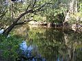 Little Manatee River SP river01.jpg