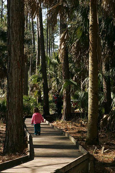 File:Little girl among tall trees on boardwalk.jpg