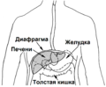 Liver (PSF) RU.png