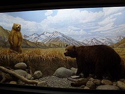 Los Angeles County Museum of Natural History - bear diorama