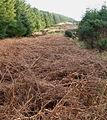 Lumsdaine Moor Plantation - geograph.org.uk - 312695.jpg