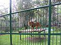 Mérida - Parque Zooloogico Chorros de Millas.jpg