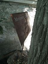 MD.C.C - Plaque of the fallen European beech, protected secular tree (MD-C-mn.Cb-135) - may 2017.jpg