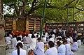 Mahabodhi Temple Complex, Bodhgaya (8716403359).jpg
