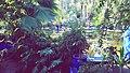 Majorelle garden in marrakech, morocco.jpg
