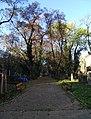 Malostranský hřbitov, hlavní cesta od kostela.jpg