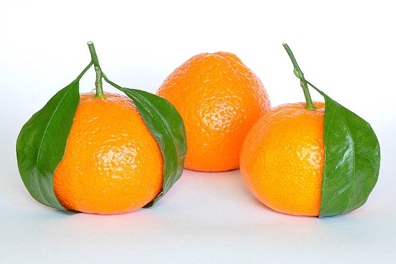 800px-Mandarin_Oranges_%28Citrus_Reticulata%29.jpg
