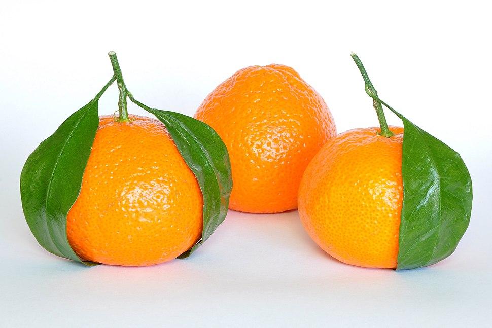 Mandarin Oranges (Citrus Reticulata)