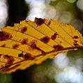 Maple Grove (2693517505).jpg