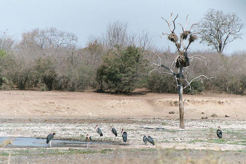 Datei:Marabou stork 2003.jpg