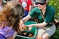 Massachusetts Turtle Celebration (5861465074).jpg