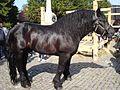 Međimurski konj (Croatia).jpg