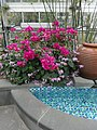 Mediterranean - US Botanic Gardens 60.jpg