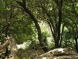 a Mediterranean forest in the galilee