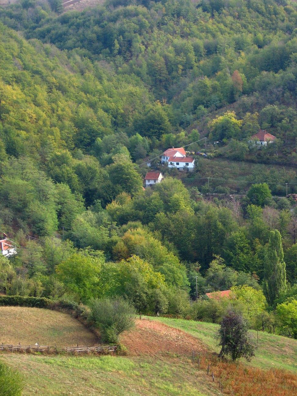 Medvednik - zapadna Srbija - mesto Rebelj - Jesenji detalj 5