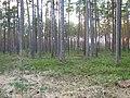 Melluzu mezs - panoramio (2).jpg