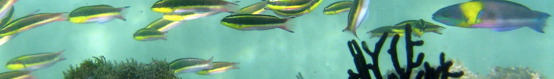 tropical fish near Playa Las Gatas