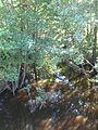 Miłoszewo - rzeka Łeba (1).jpg