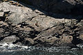 Milford Sound 2016-01-31, seals.jpg