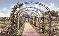 Mills-rose-garden syracuse.jpg