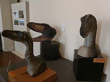 Modelos artísticos de dinossauros carnívoros.jpg