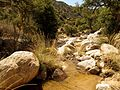 Molino Creek - Flickr - treegrow (5).jpg