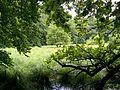 Moorgebiet im Nationalpark Jasmund.jpg
