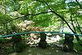 Morris Arboretum - DSC00429.JPG