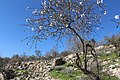 Mount Eitan IMG 2751.JPG