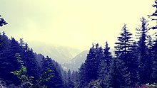 Mountain forest in India - Far from home.jpg