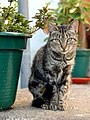 Mr cat by the vase (294604977).jpg