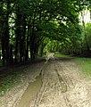 Muddy Bridleway to Weedley Springs - geograph.org.uk - 926557.jpg