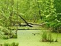 Mueggelsee - Der Thyrn - geo.hlipp.de - 36674.jpg