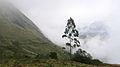 Munnar - views from Munnar (10).jpg