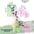NADH Dehydrogenase 2FUG Electron Carriers Labeled.png