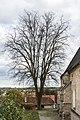 NDO 520 Kematen ad Krems Kirchenlinde Nov 2013.jpg