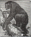 NSRW Gorilla.jpg