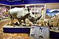 National Museum, Bloemfontein, Free State, South Africa (19916898823).jpg